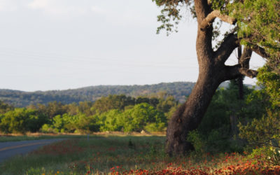 Texas Hill Country region explodes with sales amid pandemic land rush